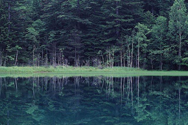 大きな森が池に映っている