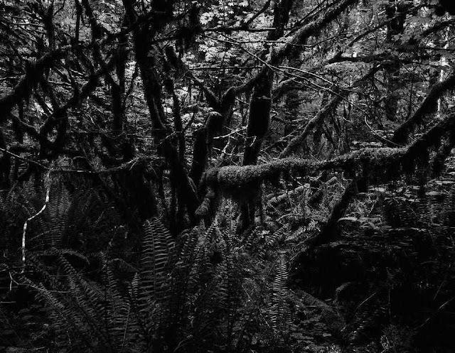 Erros simbolizados por árvores maléficas tomaram conta da Igreja