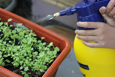 Οι χρήσεις της σόδας στα φυτά