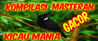 Download Kompilasi Kicau Mania Mp3 Gratis