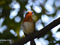Posting Artikel Blog Seperti Melepas Burung Kesayangan Ke Alam Bebas, Benarkah ?