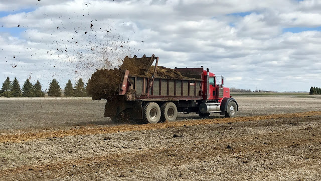 fall manure application nutrient loss nitrogen phosphorus minnesota