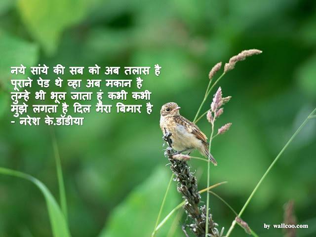 नये सांये की सब को अब तलास है Hindi Muktak By Naresh K. Dodia
