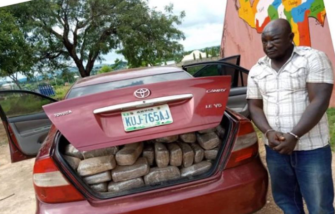 NDLEA nabs ex-staff with 254kg of marijuana in Niger