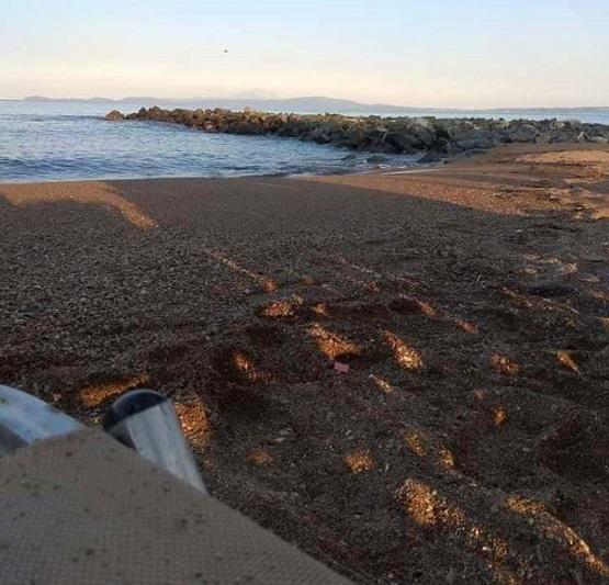 Παραλία Στρατωνίου: η νέα antigold εμμονή!!!