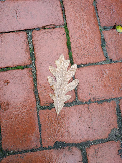 Brown oak leaf with rain droplets lying atop red brick pavers