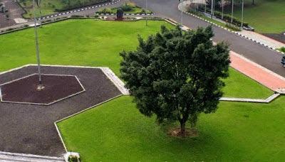 4 Tips Rekomendasi Tanaman Untuk Taman Minimalis