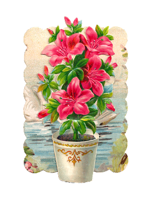 Beautiful Flower Pot full hd photos