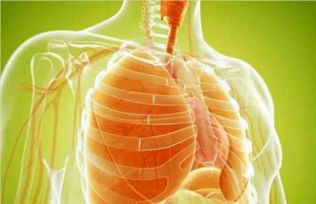 Lungs; Clean your lungs naturally