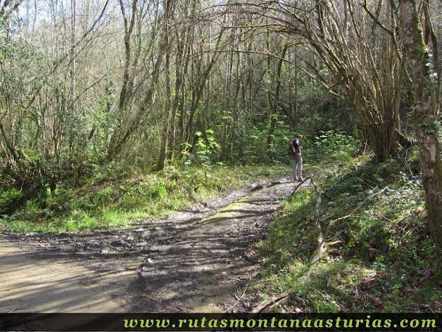 Pista por bosque en Parres