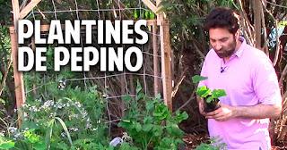 Pepinos en conserva con fermentación natural, facil y saludable - 6
