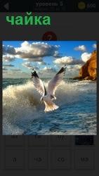 Волны бьются о берег рядом со скалой и порхает чайка, размахивая крыльями, выискивая пищу