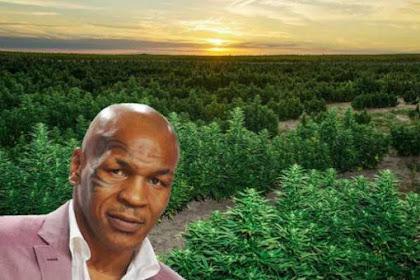 Mike Tyson Meutamah Kaya Deungon Hase Publoe Ganja, 7 Miliar Si Buleun