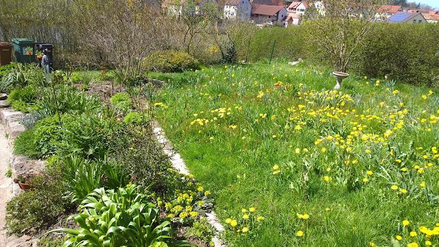 Blumenwiese und Staudenbeet im April (c) by Joachim Wenk
