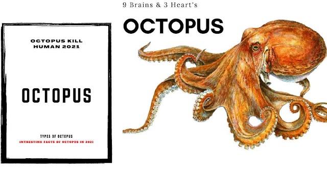 Can Octopus Eat A Human In Hindi 2021 -  क्या एक ऑक्टोपस इंसान को खा सकता है ?
