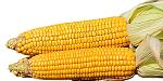 Maize corn capsicum vegetable recipe||मक्का शिमला मिर्च की सब्जी की विधि||