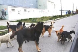 Perros sueltos en Ushuaia Cronicas Fueguinas