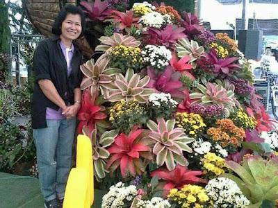 Tukang Taman Surabaya Jual Bromelia Neored