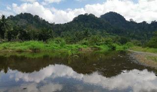 Isla de Java, Parque Nacional de Meru Betiri.