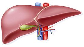علاج الفشل الكبدي