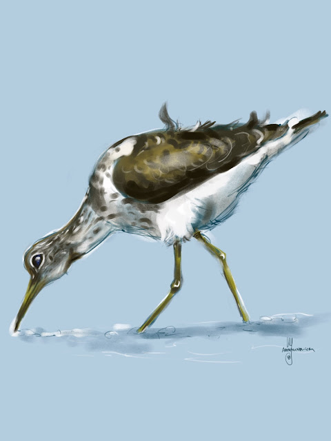 Greenshank bird painting by Artmagenta