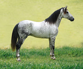 https://fr.wikipedia.org/wiki/Cheval