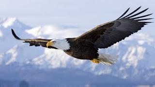 Volare al di sopra della tempesta come l'aquila