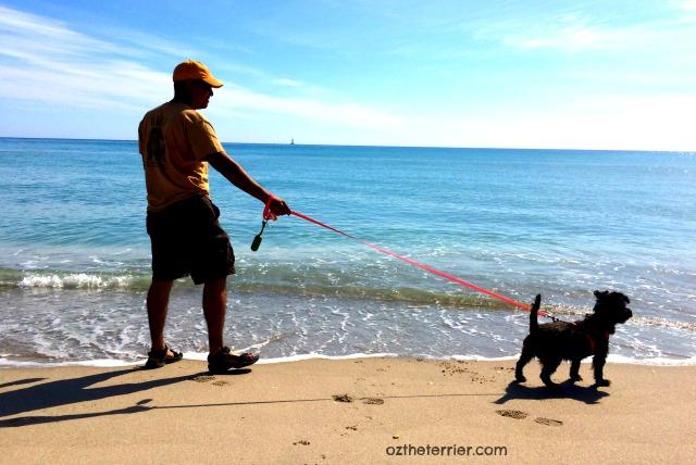 Oz at Jupiter Dog Beach