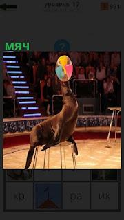 На арене цирка животное носом вращает мячик, находясь на тумбе