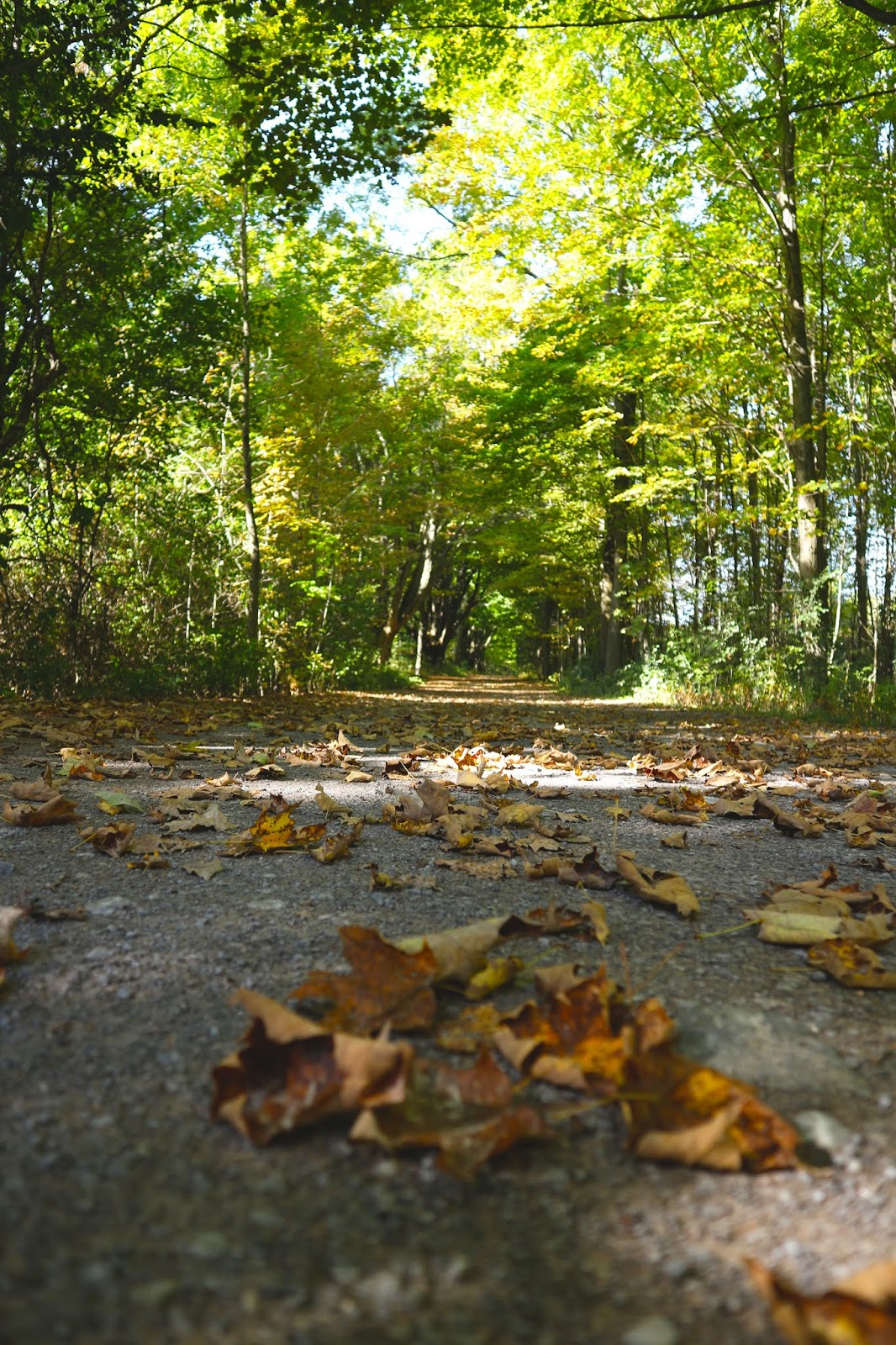 Fall Staycation in Brighton, Ontario - Bay of Quinte - Rosalyn Gambhir