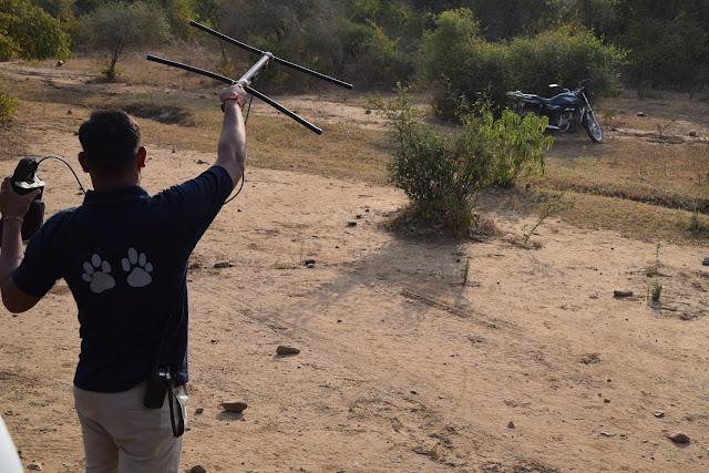Sariska Forest Ranger Tracking Tiger