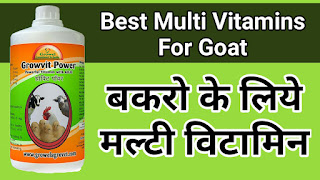 Best Multi- Vitamin For Goat And Poultry.