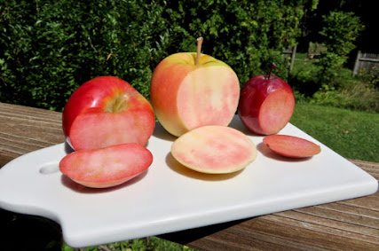 Three red-fleshed apples, sliced
