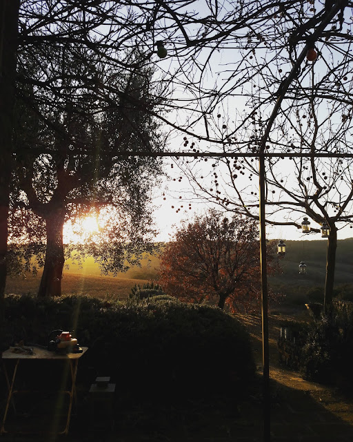 A Tuscan garden at sunset