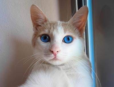 Cute Cats Kitty Pets 20