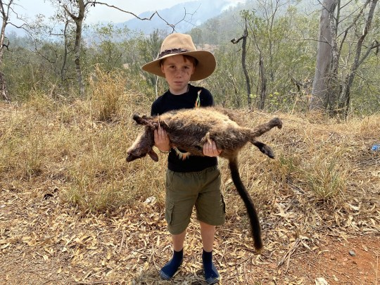 A wildlife expert shares heartbreaking photo of his son holding a dead wallaby, as he urged the world to wake up to the 'mass devastation' in Australia
