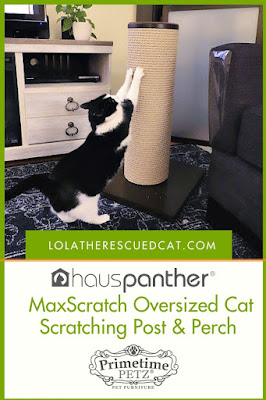 Hauspanther MaxScratch Scratcher pinterest graphic