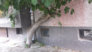 Fig Tree, Yambol, Apartment Block, Foundations,