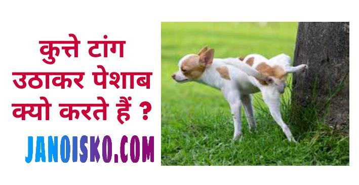 कुत्ते टांग उठाकर पेशाब क्यो करते हैं ?