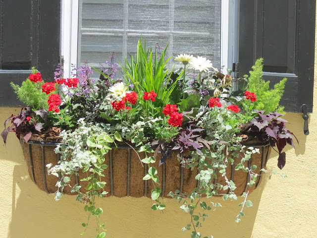 charleston window box boxes full sun easy to grow and maintain