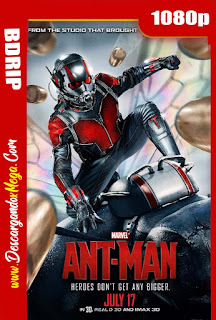 Ant-Man El Hombre Hormiga (2015) BDRip 1080p Latino