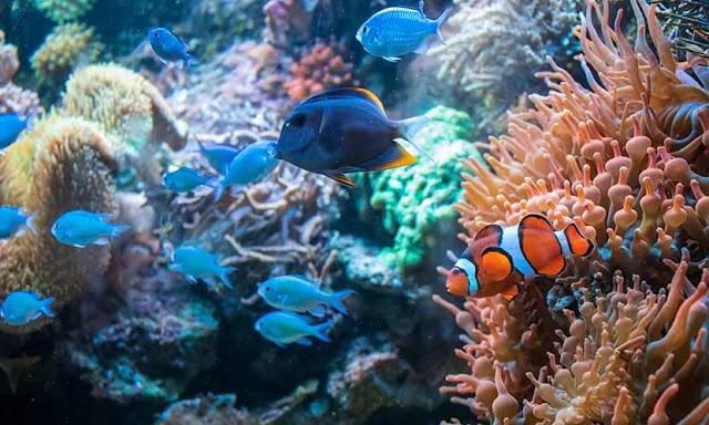 All About Aquarium Care