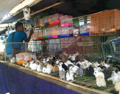 Hindari Membeli Kelinci Di pasar