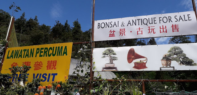 Bonsai & Antique @ Cameron Highland
