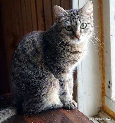 Тигра - Полосатая малышка очень хочет стать домашней