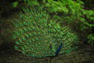 Top 10 Most Beautiful Birds In The World.