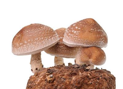 Scope of Mushroom business In Jalna
