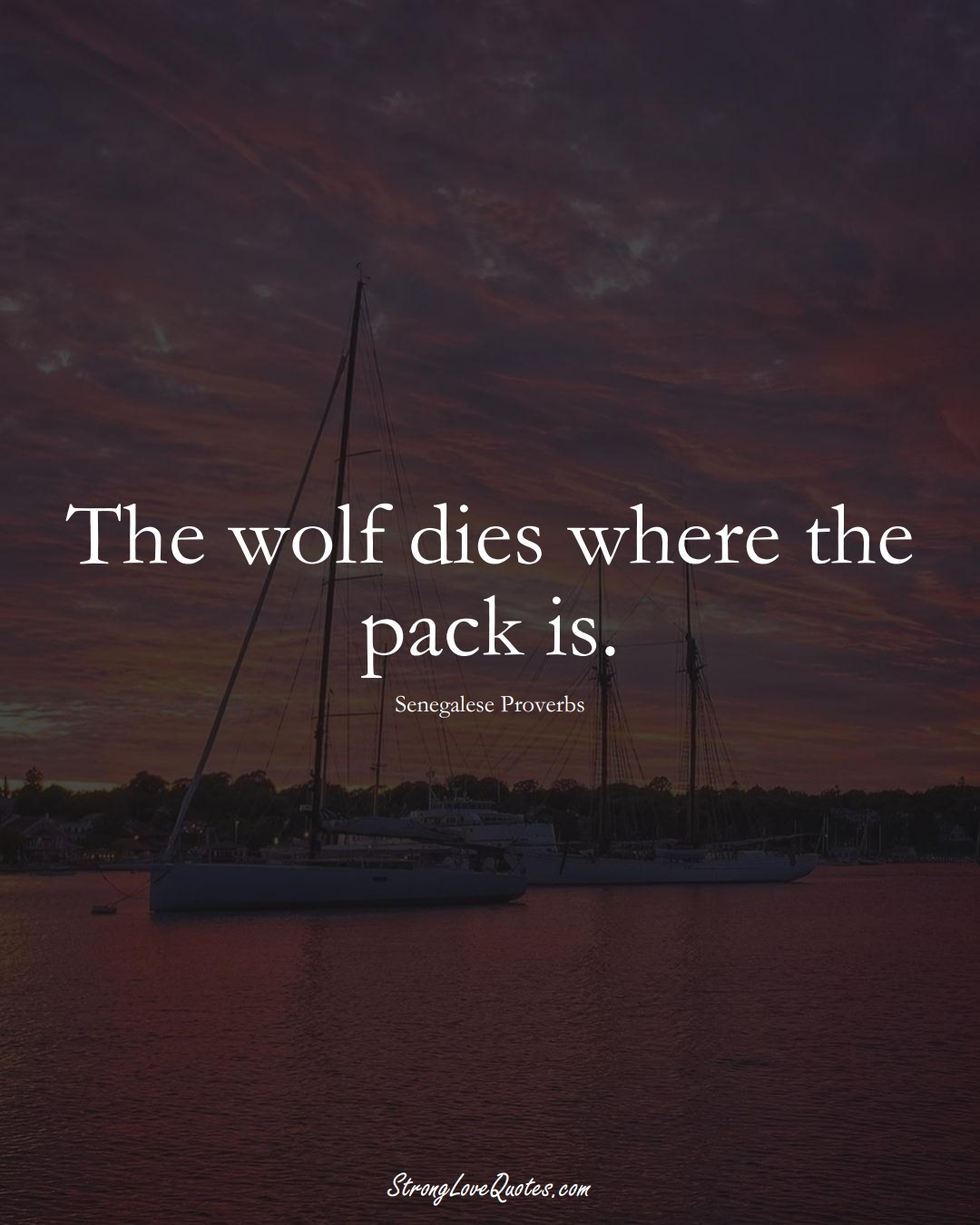 The wolf dies where the pack is. (Senegalese Sayings);  #AfricanSayings