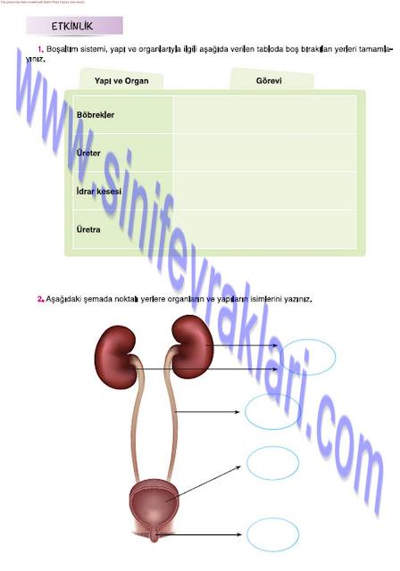 7. Sınıf Fen Bilimleri Ders Kitabı Cevapları Mevsim Yayınları Sayfa 28