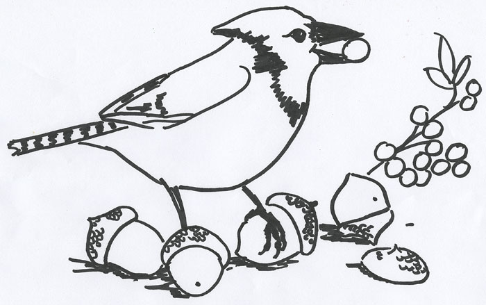 blue jay coloring page - red and the peanut a free bird painting workshop along